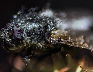 Insekten