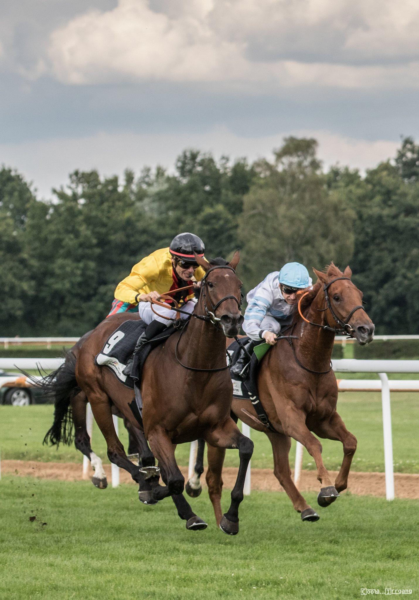 Pferderennen Auf Der Bult