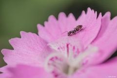 Makrofotos von Ameisen
